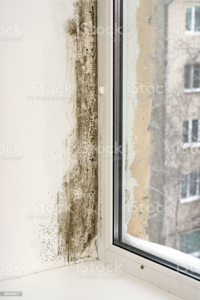 Close-up of a corner wall covered whit mold and a window royalty-free stock photo