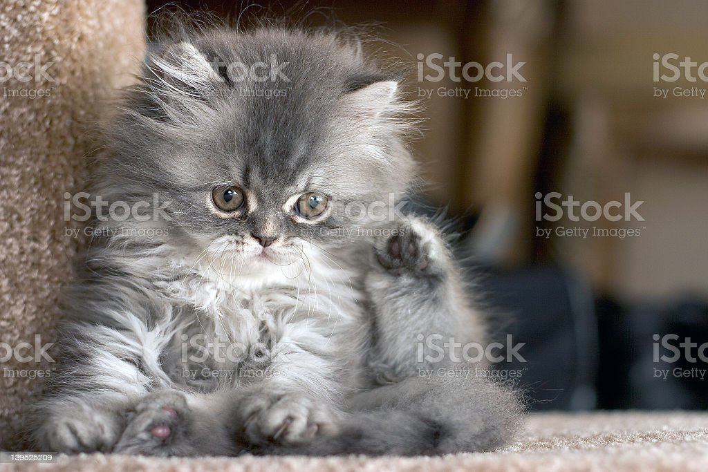 Close-up of a cute kitten resting on a step stock photo
