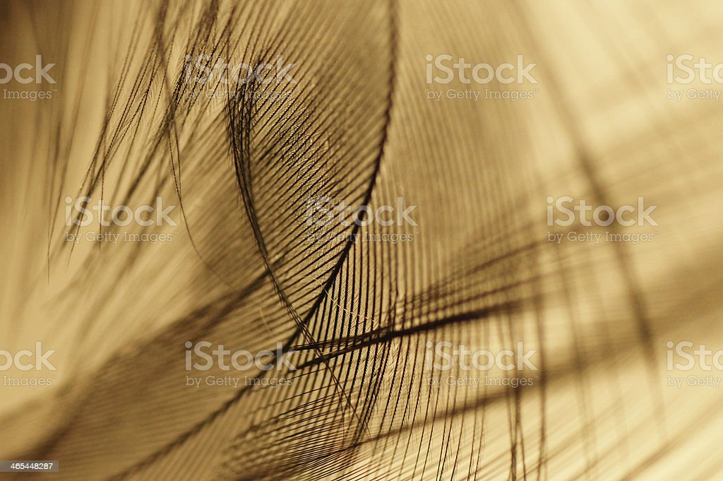 Close-up of a dark feather with yellow background royalty-free stock photo