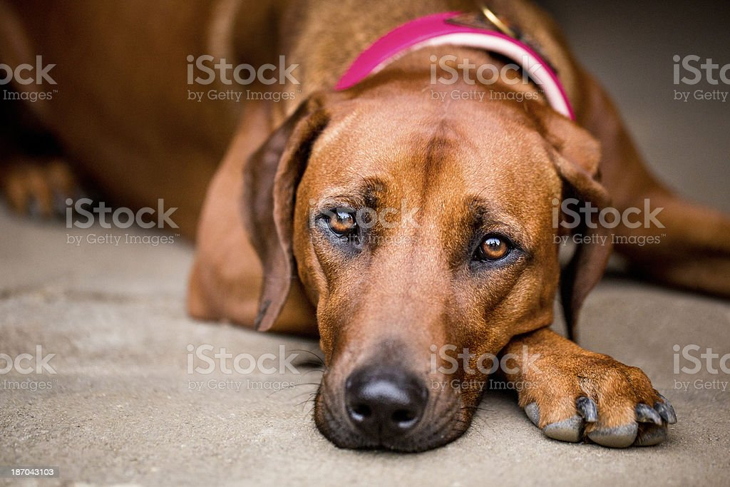 Close-up Of A Dog stock photo