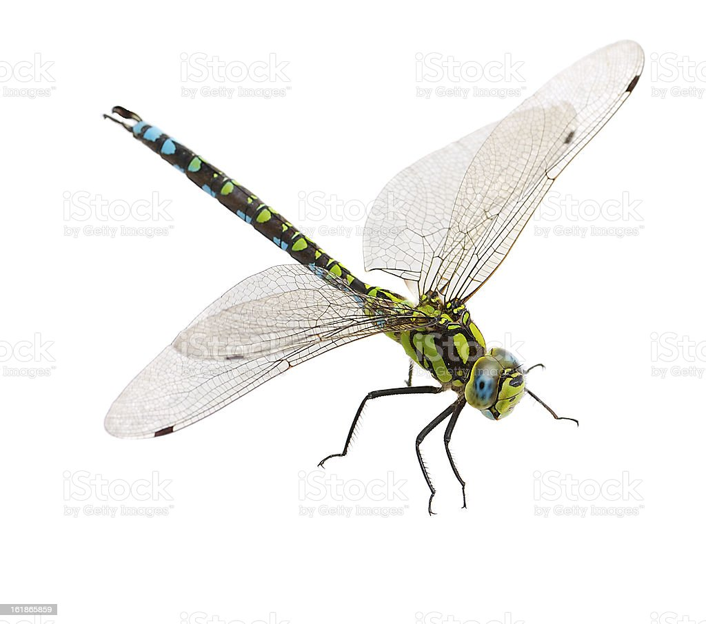 Close-up of a dragonfly isolated on a white background stock photo