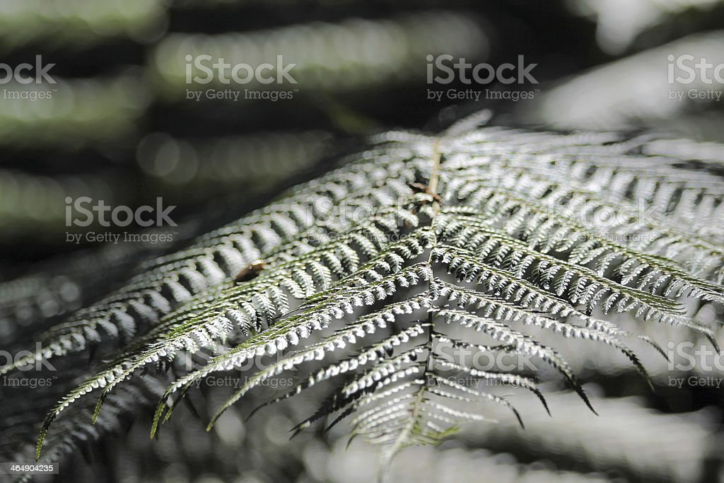 Close-up of a fern frond stock photo