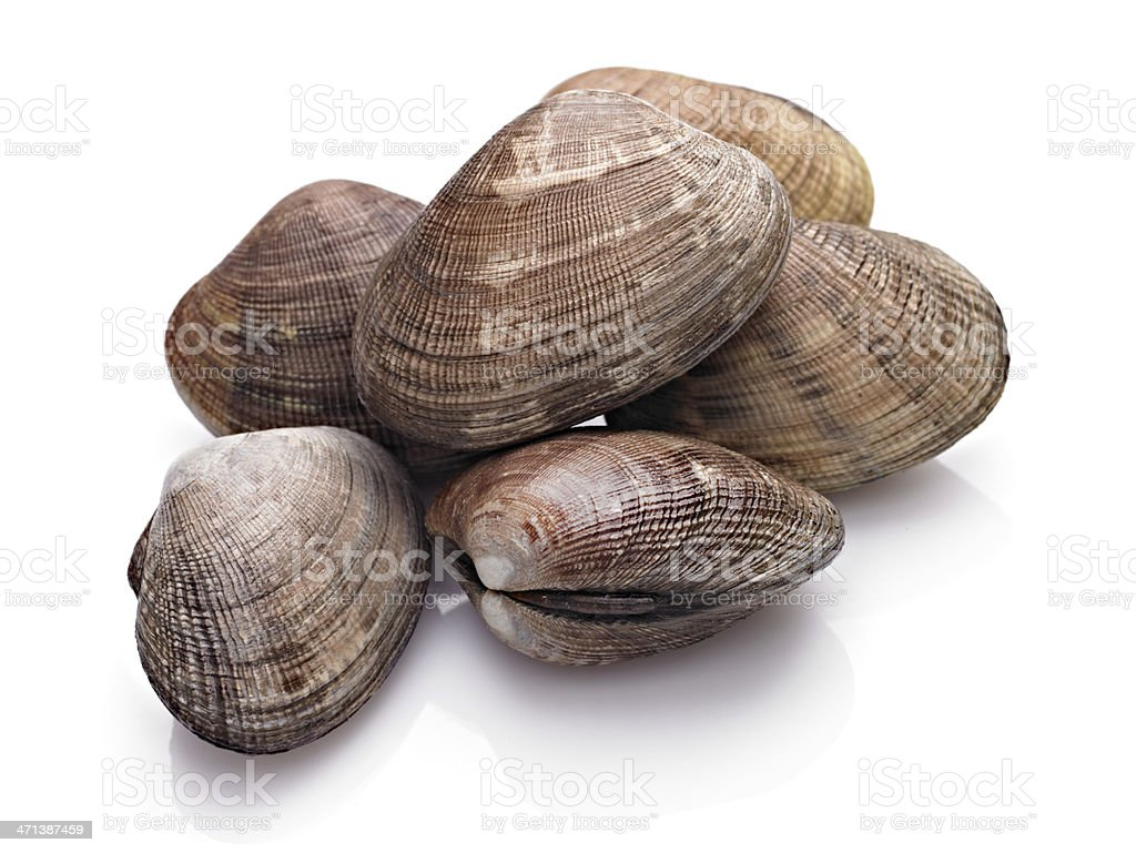 Close-up of a few closed clamshells on a white surface stock photo