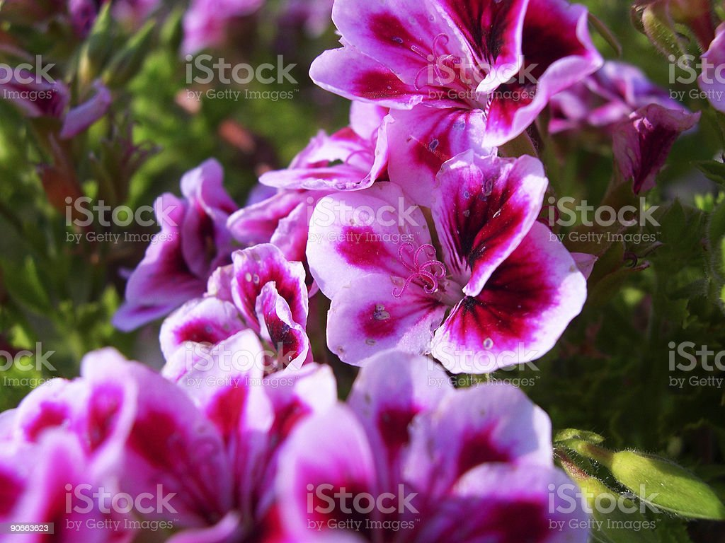 Close-up of a flower royalty-free stock photo