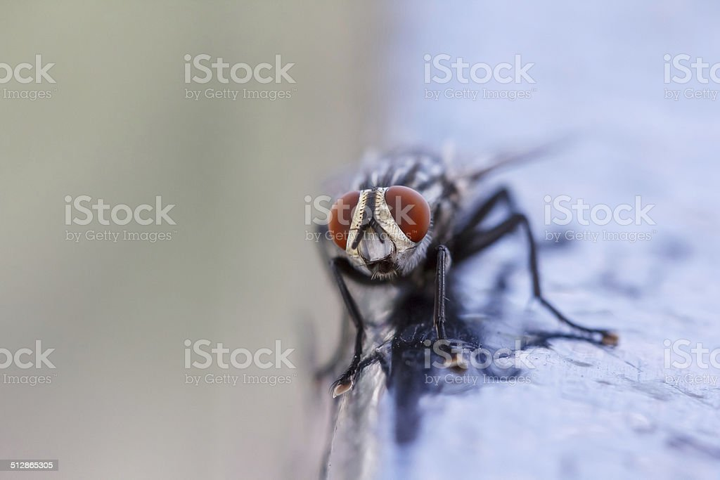 Close-up of a fly stock photo