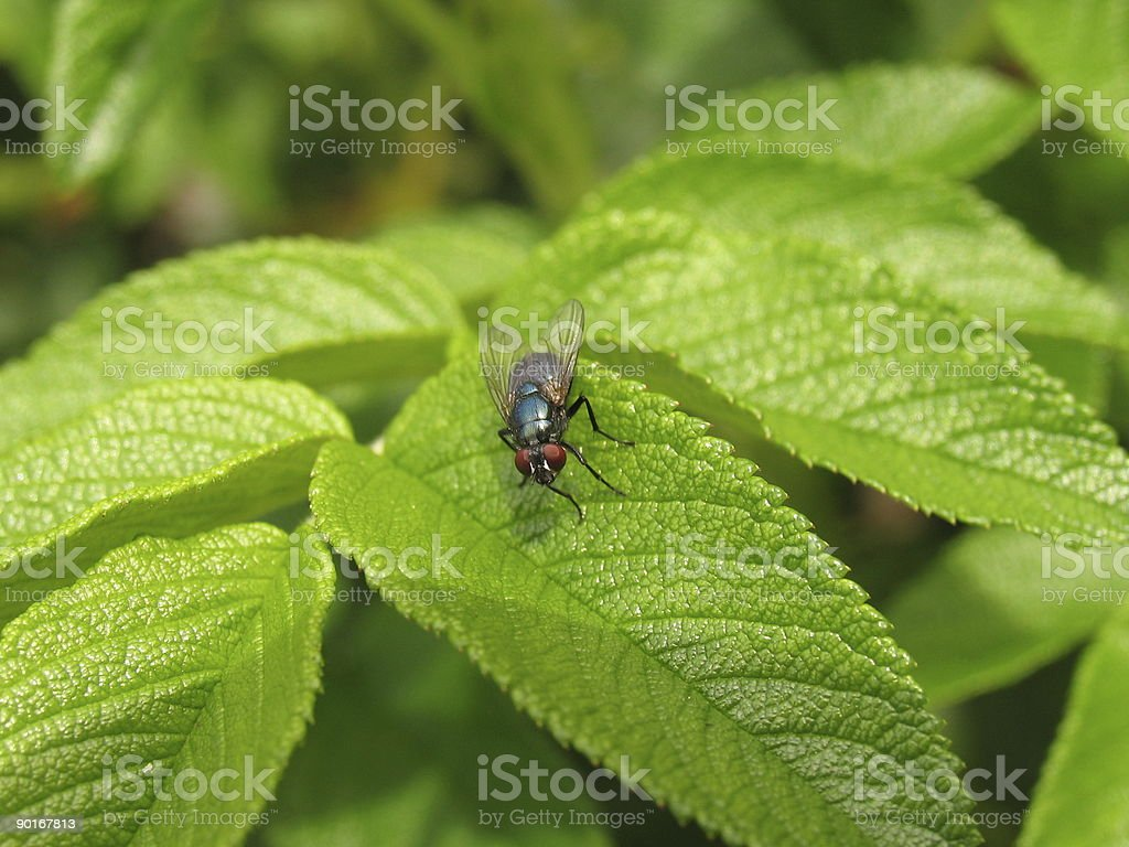 Closeup of a fly stock photo