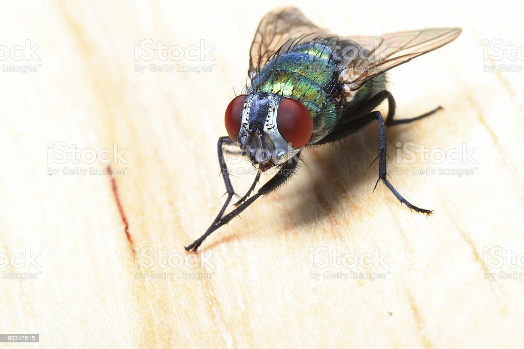 Close-up of a fly resting on a wooden board stock photo