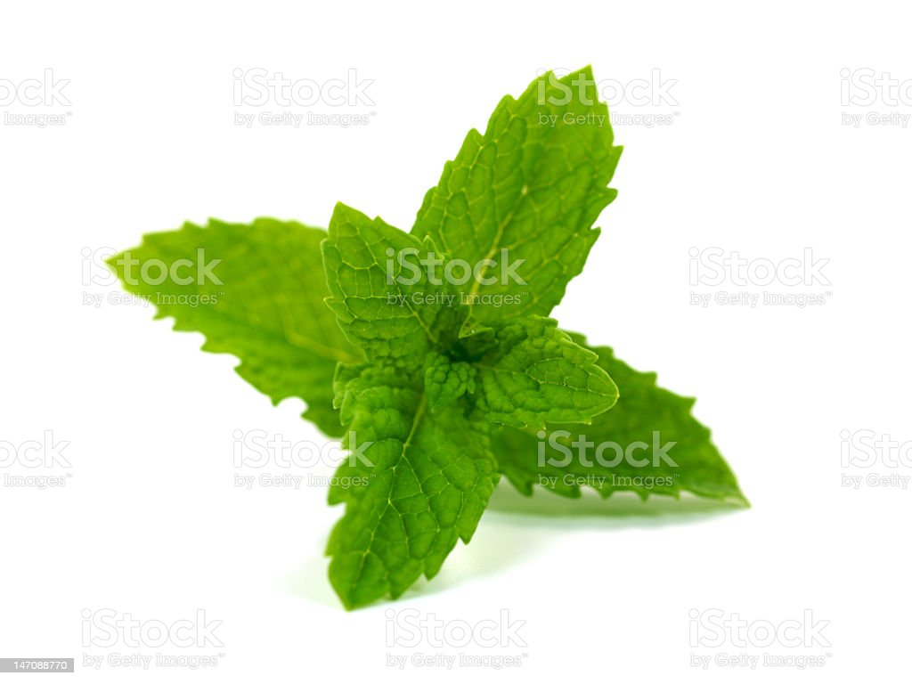 Close-up of a fresh mint isolated on white background stock photo