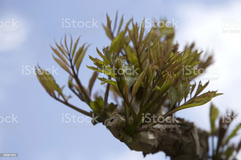 closeup of a grapevine royalty-free stock photo