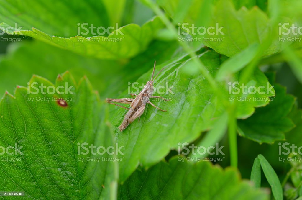 closeup of a grasshopper sitting on plant stock photo