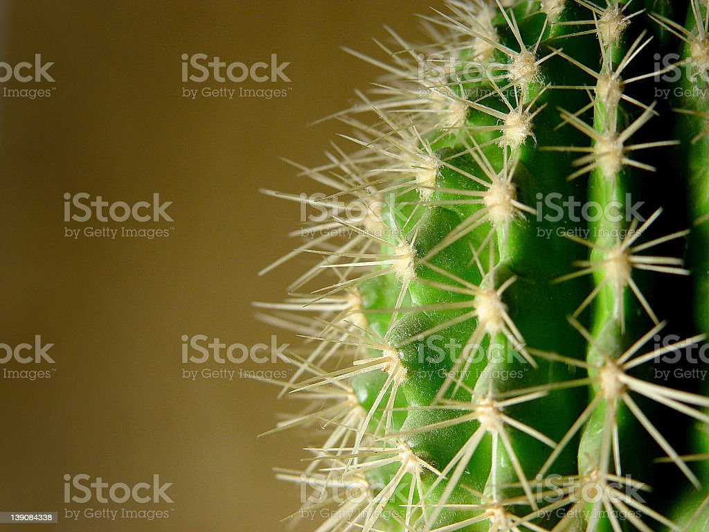 Close-up of a green cactus' white prickly needles royalty-free stock photo