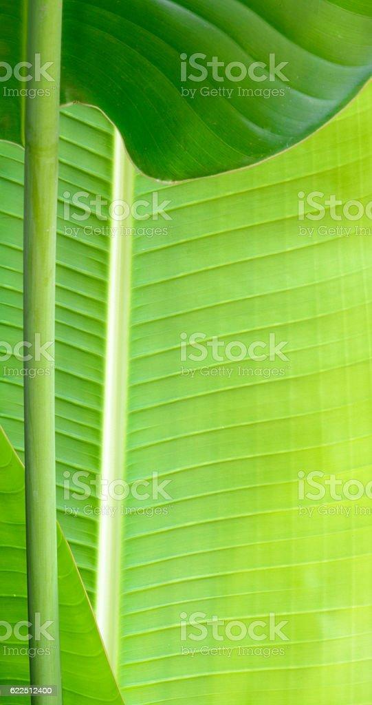 Closeup of a green leaf stock photo