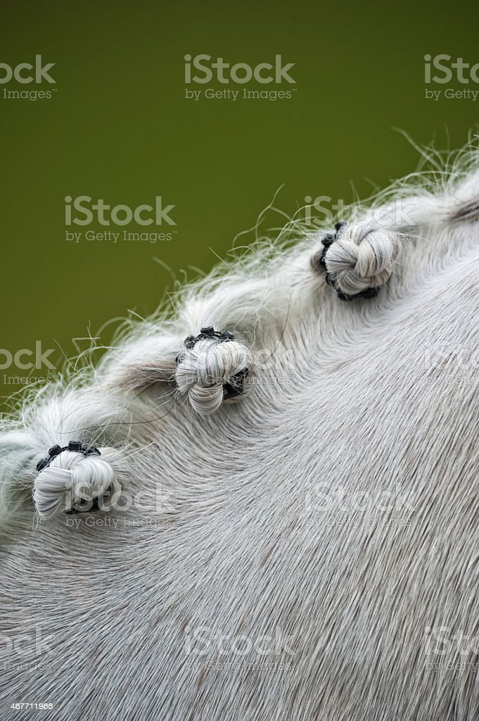 Close-up of a grey horse's braids stock photo