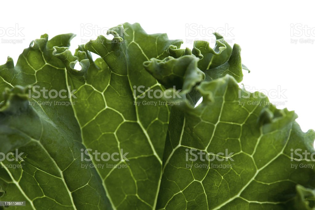 closeup of a kale leaf on white background stock photo