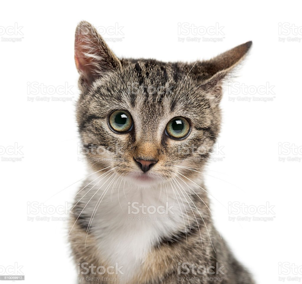 Close-up of a kittenin front of a white background stock photo