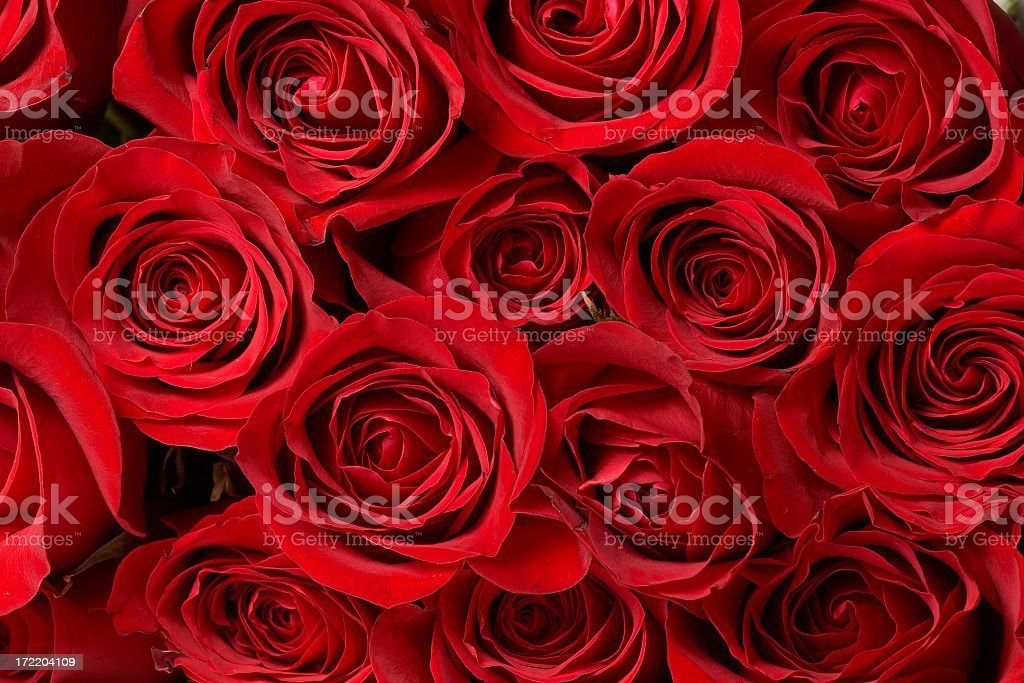 A close-up of a large bouquet of red roses stock photo