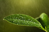 Closeup of a leaf covered in droplets with bokeh background