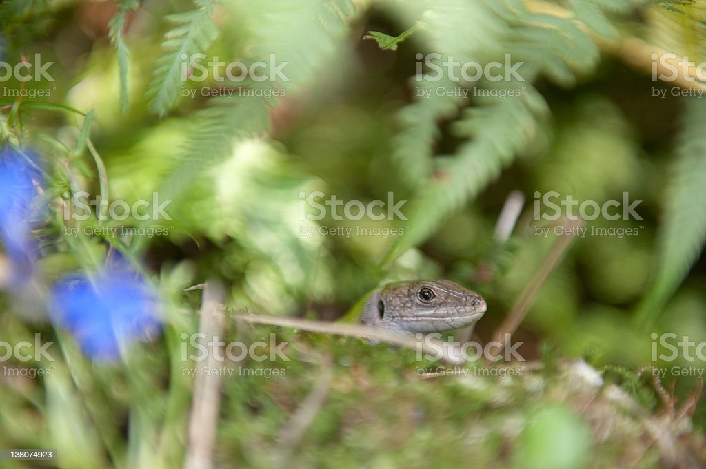 Close-up of a lizard stock photo