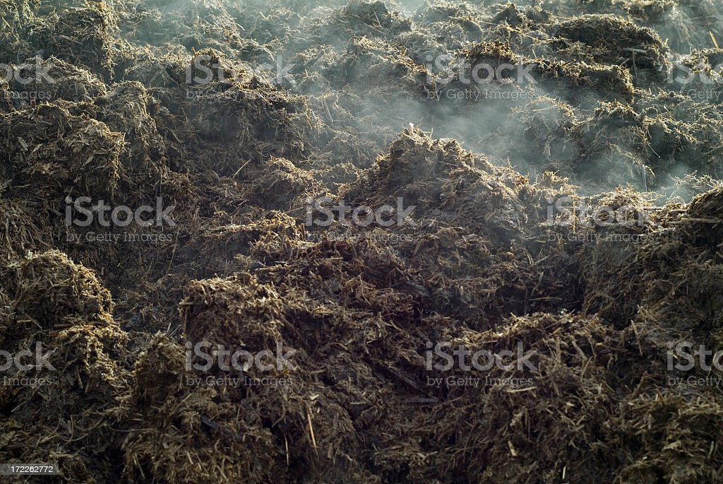 Close-up of a lot of steaming manure stock photo