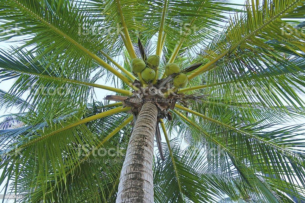 Closeup of a lush palm stock photo