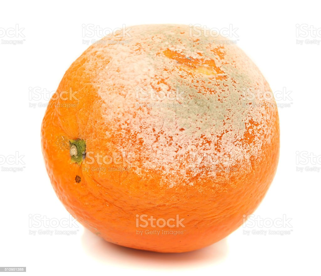 closeup of a moldy orange on a white background stock photo