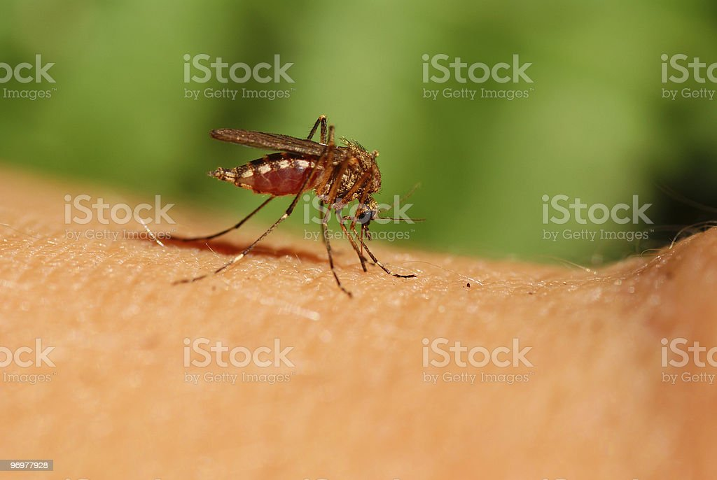 Close-up of a mosquito on a person's body part stock photo