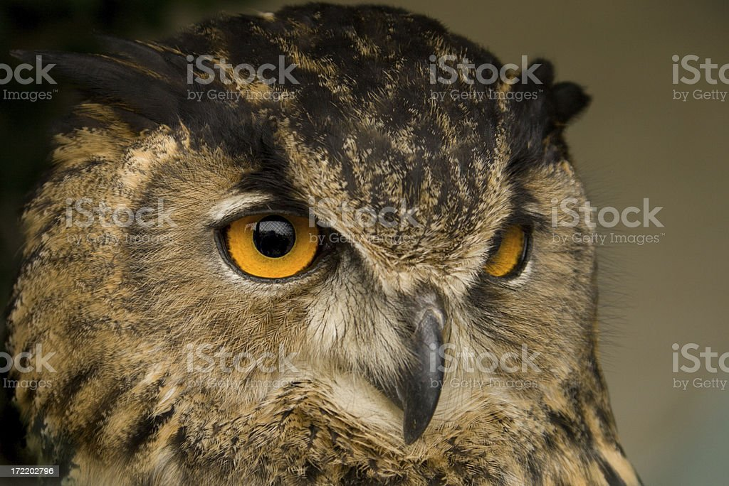 Closeup of a owl's face on brown background stock photo