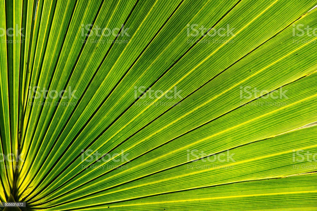 Close-up of a palm leaf royalty-free stock photo