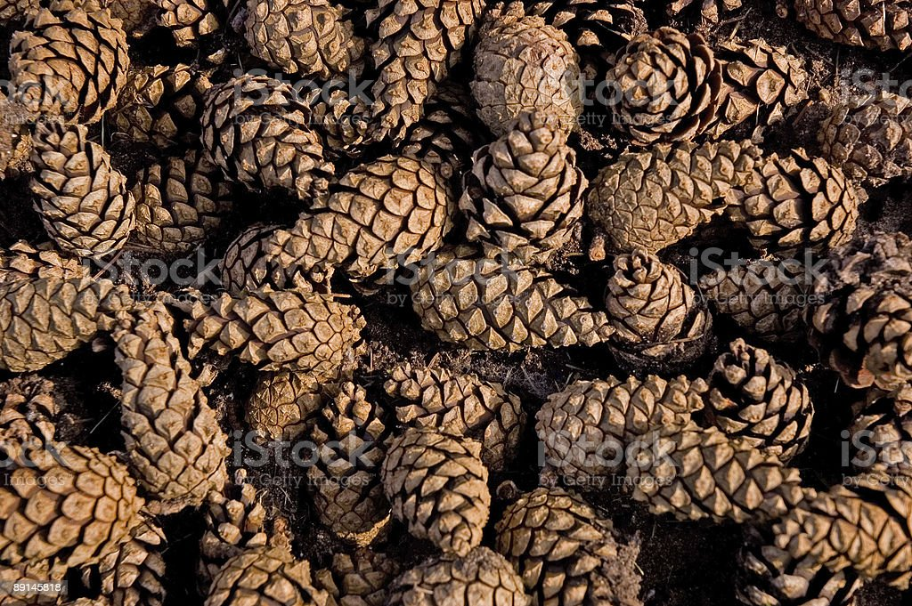 Close-up of a pile of brown and tan colored pine cones royalty-free stock photo