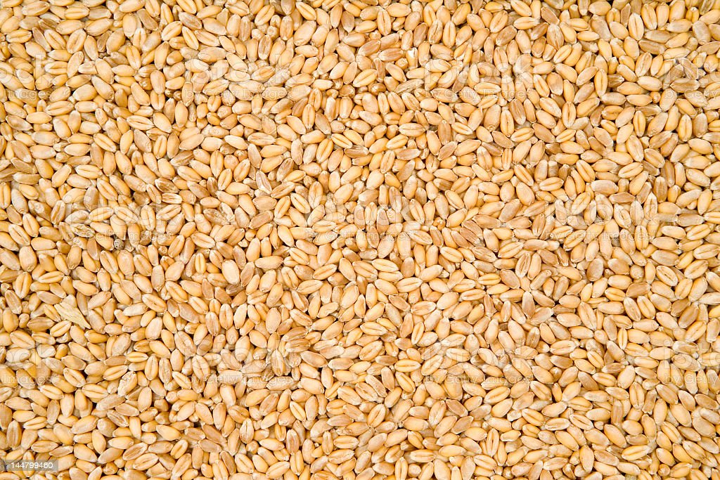 Close-up of a pile of wheat texture stock photo