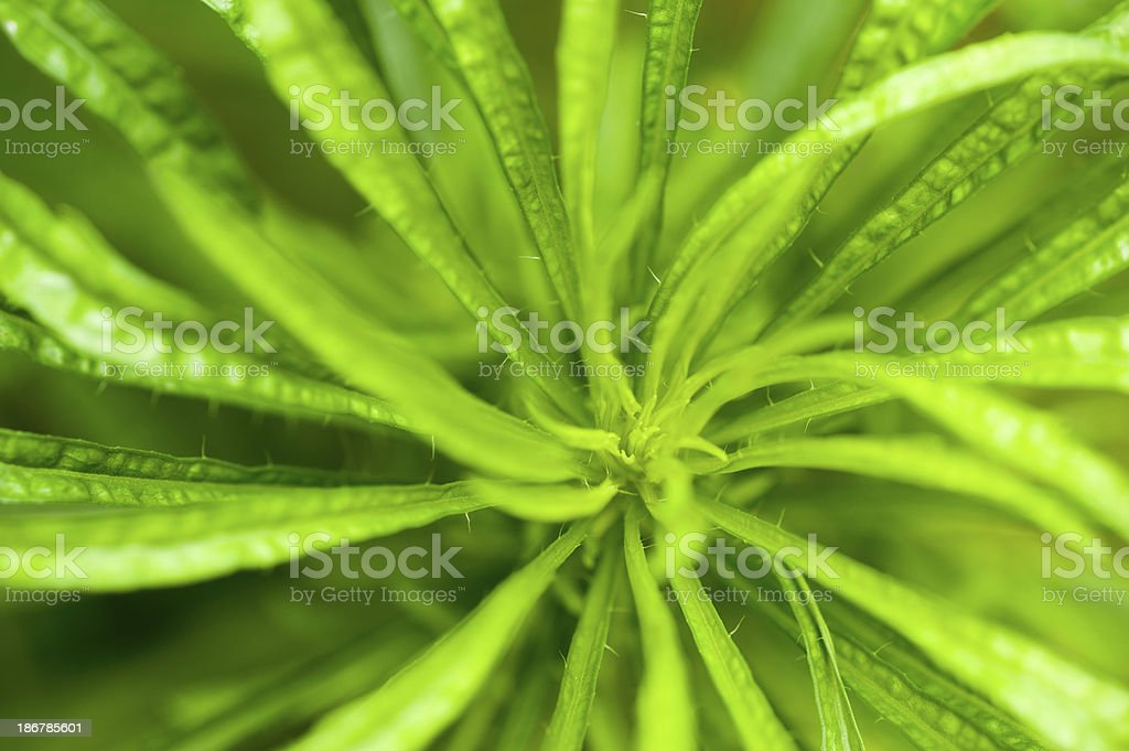 Close-up of a Plant stock photo