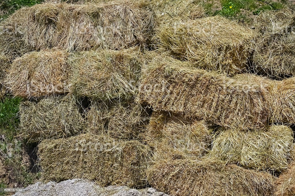 Closeup of a rolled hay stock photo