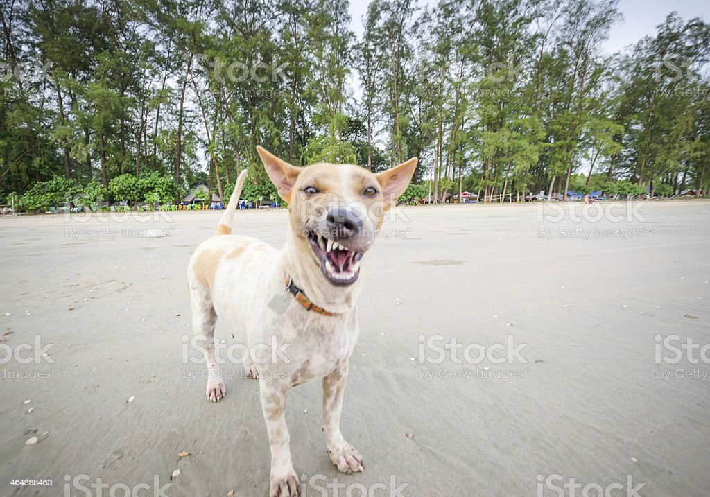 Closeup of a scary  dog stock photo