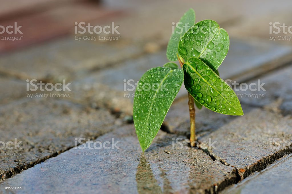 Close-up of a small plant growing through bricks royalty-free stock photo