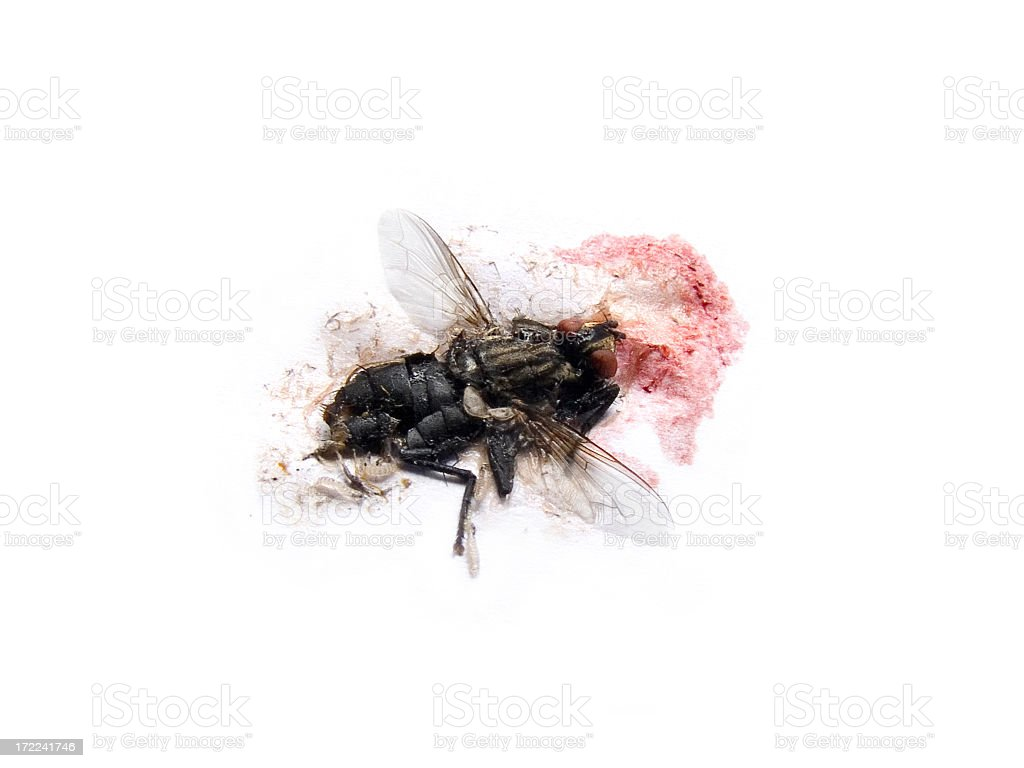 Close-up of a smashed fly over a white background royalty-free stock photo