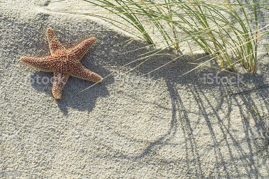 Close-up of a starfish at the beach / dune stock photo
