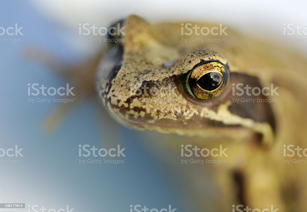 Close-up of a toad / frog stock photo