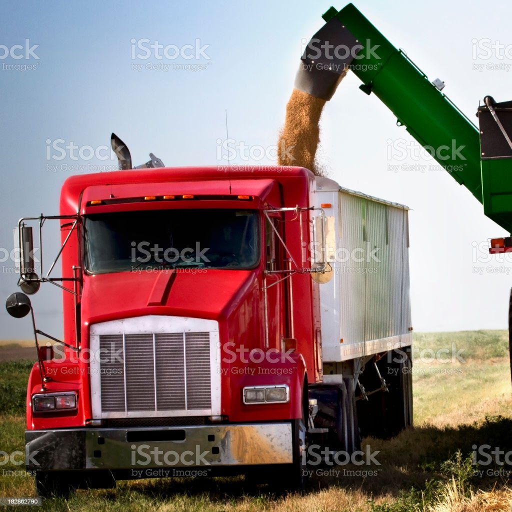Close-up of a truck with heavy equipment transferring wheat stock photo