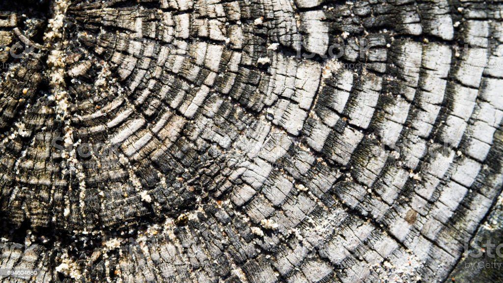 closeup of a weathered tree stump stock photo