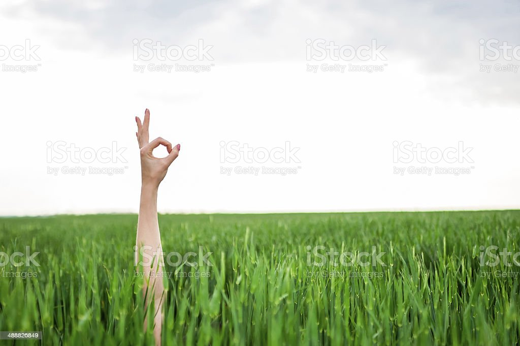 Closeup of a woman's hand making ok or zero sign stock photo