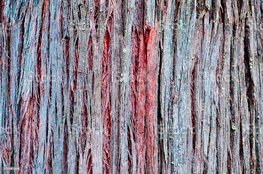 Close-up of aged bark stock photo