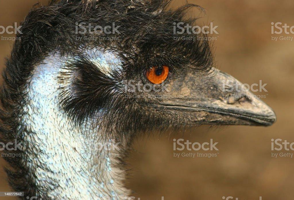 Primer plano de una parte de la UEM Bird foto de stock libre de derechos