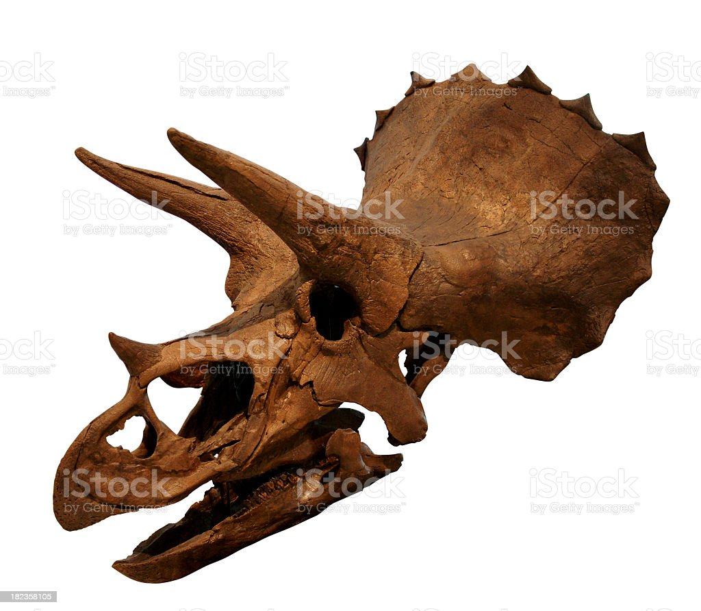 Close-up of an old dinosaur skull royalty-free stock photo