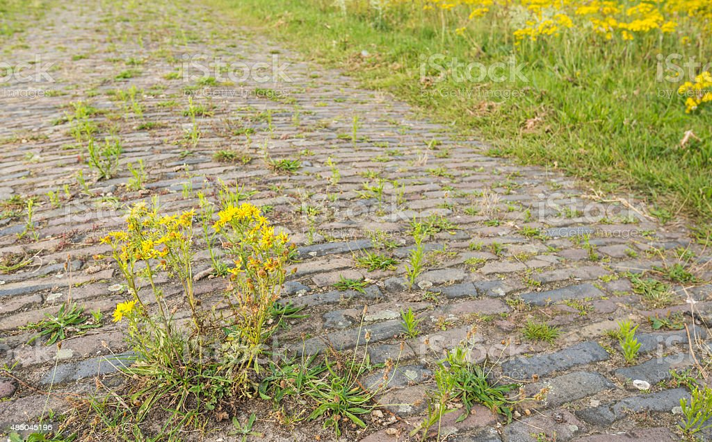 Closeup of an old paved road overgrown with weeds stock photo