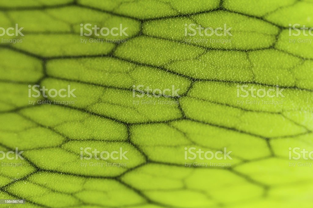 close-up of andinum fern royalty-free stock photo