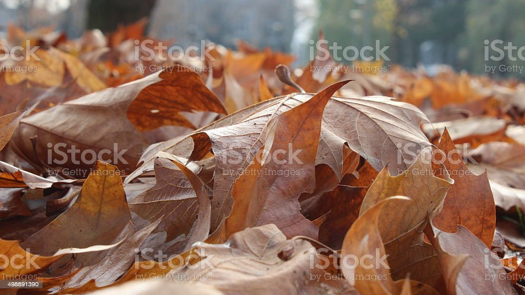 Close-up of Autumn Leaves stock photo