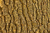 Close-Up of Bark Pattern