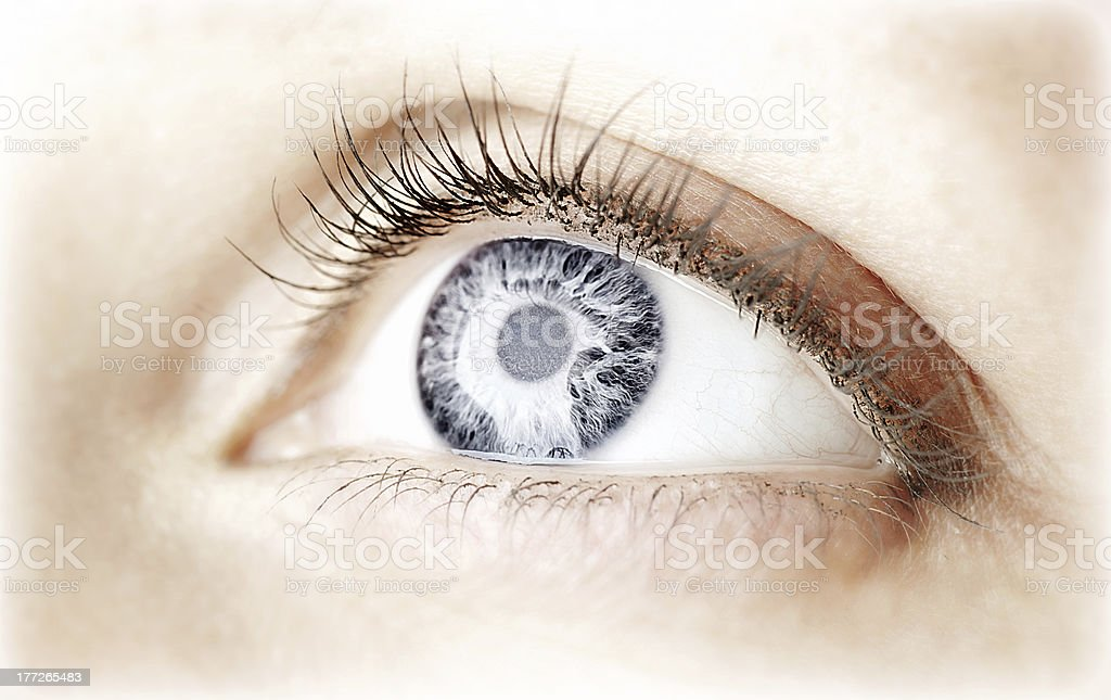 Close-up of beautiful blue eye with curly long lashes royalty-free stock photo