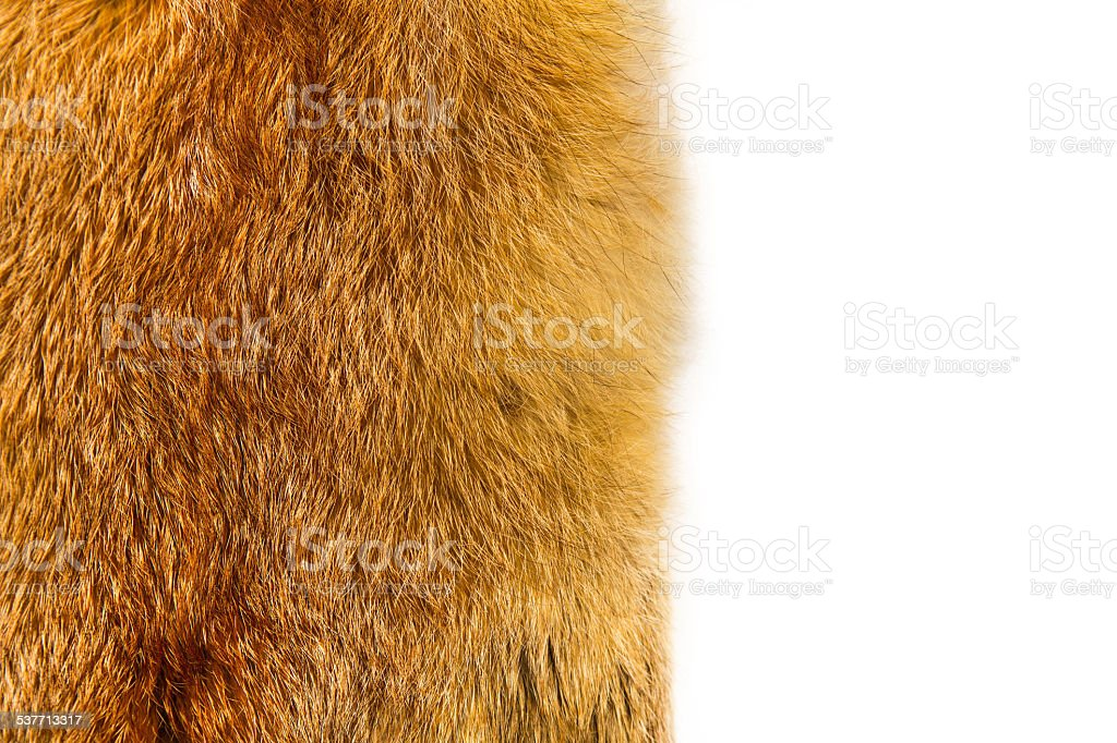 Closeup of beautiful red Fox fur stock photo