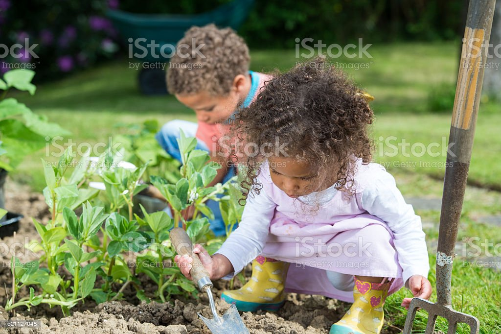Close-up Of Biracial Little Girl And Boy Gardening stock photo